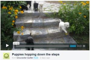 HoppingPuppies